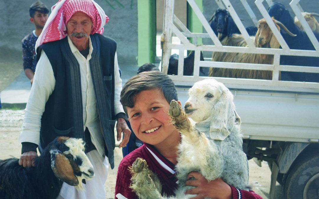 Jak rozwija się projekt zakupu zwierząt hodowlanych, nasza wizyta Karakosz inie tylko – podsumowanie grudniowego wyjazdu do Iraku – cz. 1