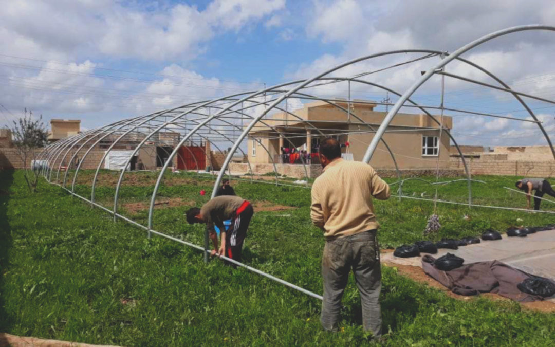 We are waiting for harvest – the end of the first stage of building a greenhouse