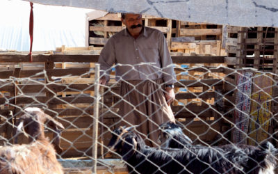 By the end of the year, 180 families will have received livestock